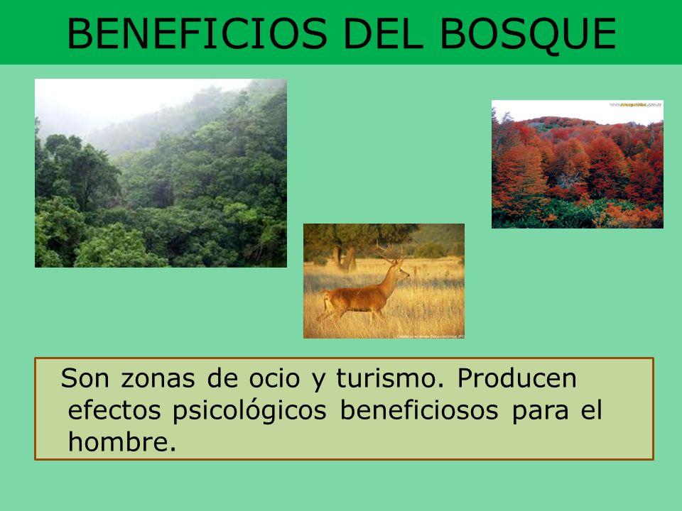 BENEFICIOS DEL BOSQUE Son zonas de ocio y turismo. Producen efectos psicológicos beneficiosos para el hombre.