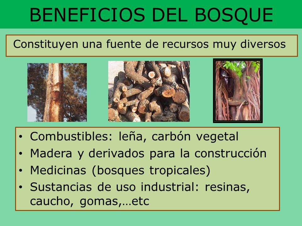 BENEFICIOS DEL BOSQUE Combustibles: leña, carbón vegetal Madera y derivados para la construcción Medicinas (bosques tropicales) Sustancias de uso indu