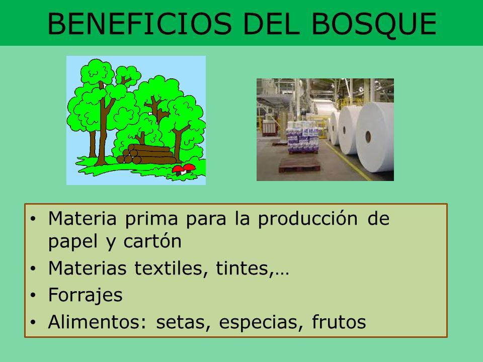 BENEFICIOS DEL BOSQUE Materia prima para la producción de papel y cartón Materias textiles, tintes,… Forrajes Alimentos: setas, especias, frutos