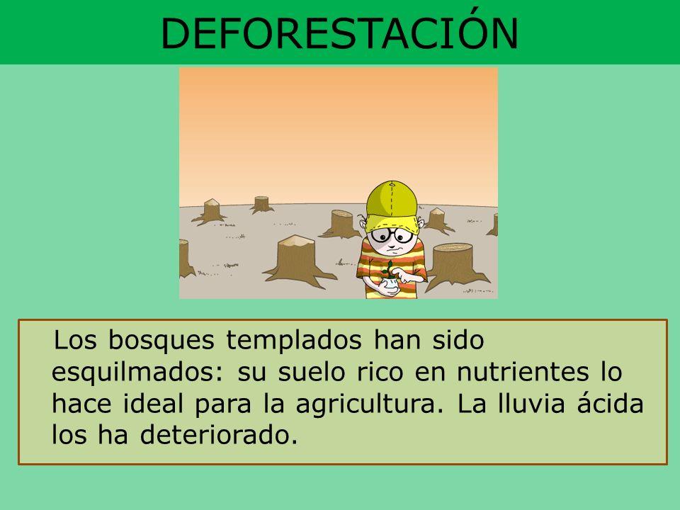 DEFORESTACIÓN Los bosques templados han sido esquilmados: su suelo rico en nutrientes lo hace ideal para la agricultura. La lluvia ácida los ha deteri