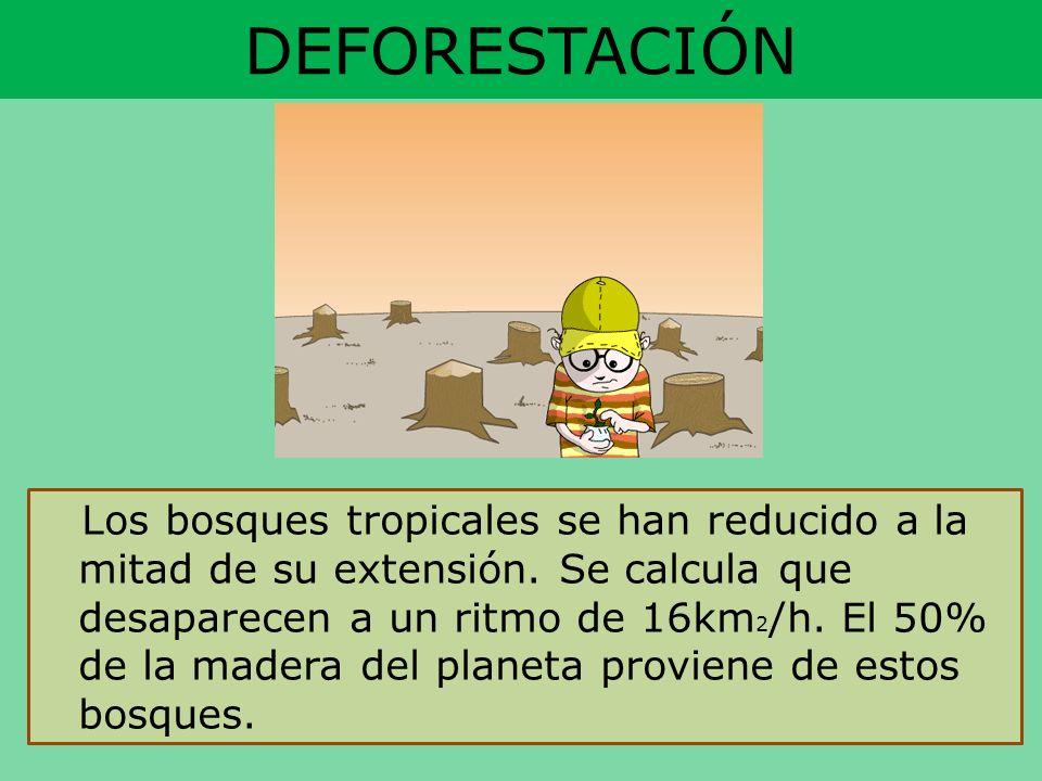 DEFORESTACIÓN Los bosques tropicales se han reducido a la mitad de su extensión. Se calcula que desaparecen a un ritmo de 16km 2 /h. El 50% de la made