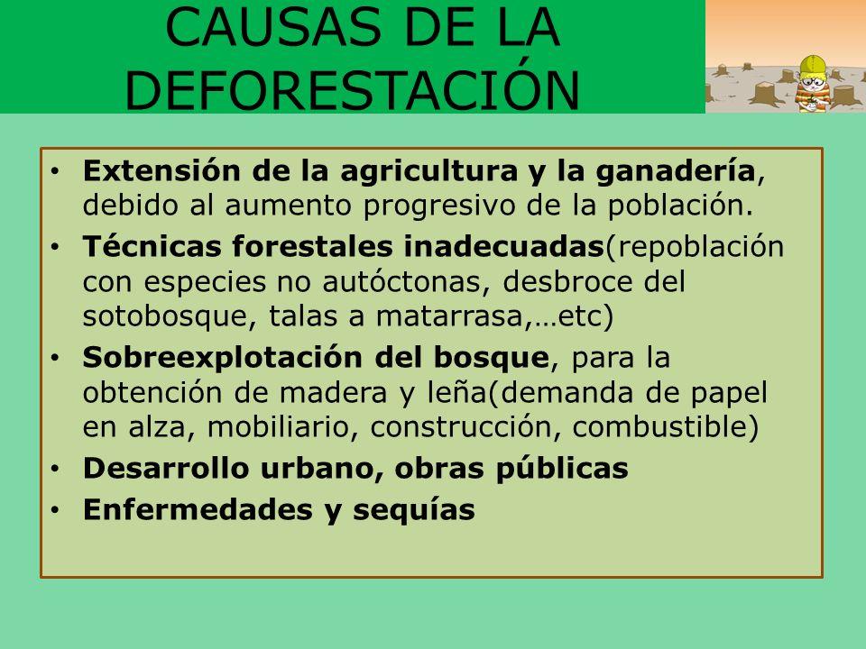 CAUSAS DE LA DEFORESTACIÓN Extensión de la agricultura y la ganadería, debido al aumento progresivo de la población. Técnicas forestales inadecuadas(r