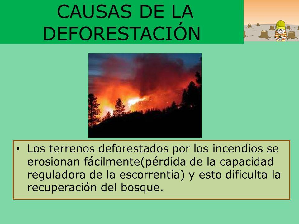 CAUSAS DE LA DEFORESTACIÓN Los terrenos deforestados por los incendios se erosionan fácilmente(pérdida de la capacidad reguladora de la escorrentía) y