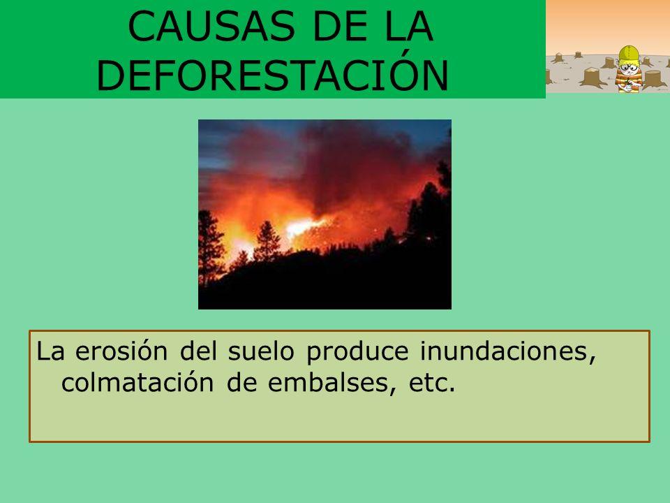 CAUSAS DE LA DEFORESTACIÓN La erosión del suelo produce inundaciones, colmatación de embalses, etc.