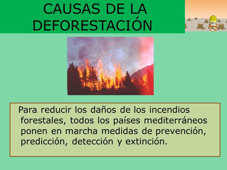 CAUSAS DE LA DEFORESTACIÓN Para reducir los daños de los incendios forestales, todos los países mediterráneos ponen en marcha medidas de prevención, p
