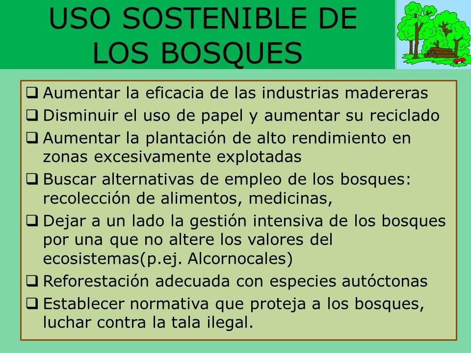 USO SOSTENIBLE DE LOS BOSQUES Aumentar la eficacia de las industrias madereras Disminuir el uso de papel y aumentar su reciclado Aumentar la plantació