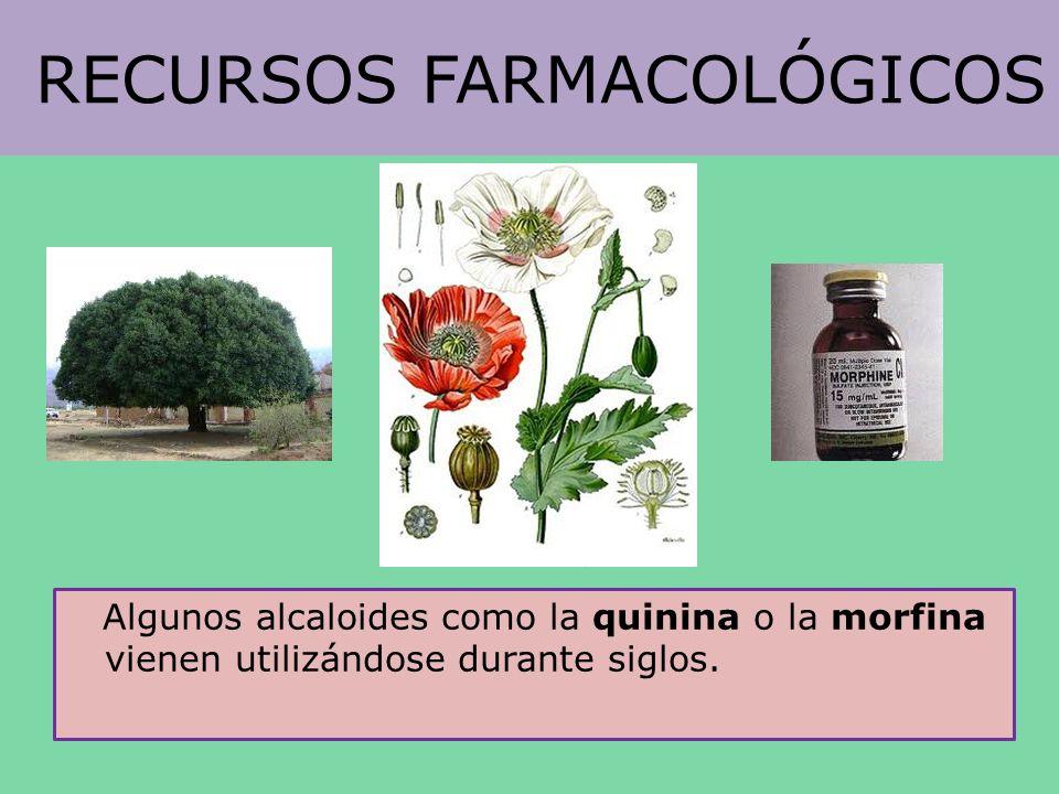 RECURSOS FARMACOLÓGICOS Algunos alcaloides como la quinina o la morfina vienen utilizándose durante siglos.