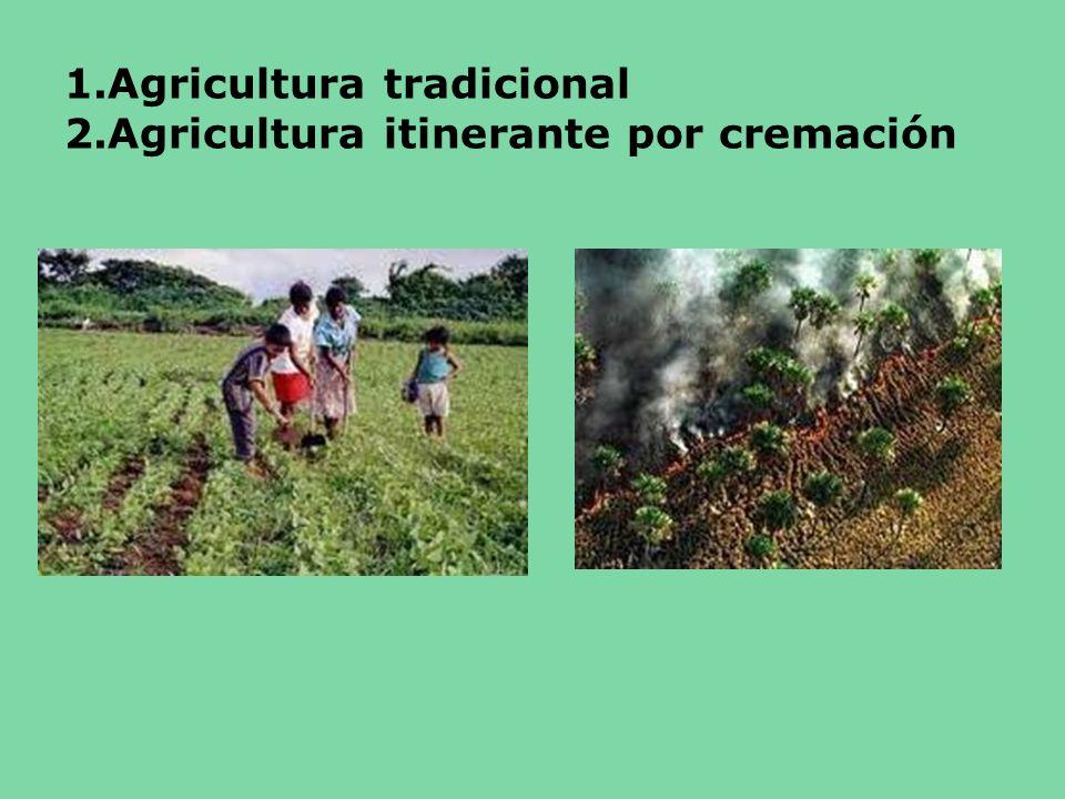 1.Agricultura tradicional 2.Agricultura itinerante por cremación