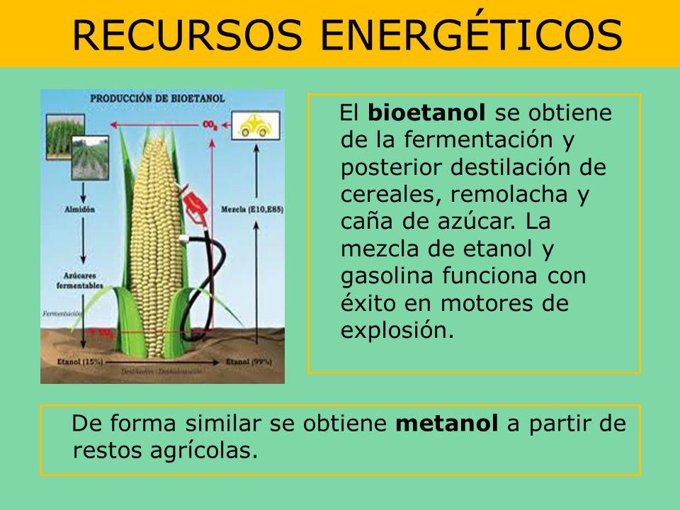 RECURSOS ENERGÉTICOS El bioetanol se obtiene de la fermentación y posterior destilación de cereales, remolacha y caña de azúcar. La mezcla de etanol y