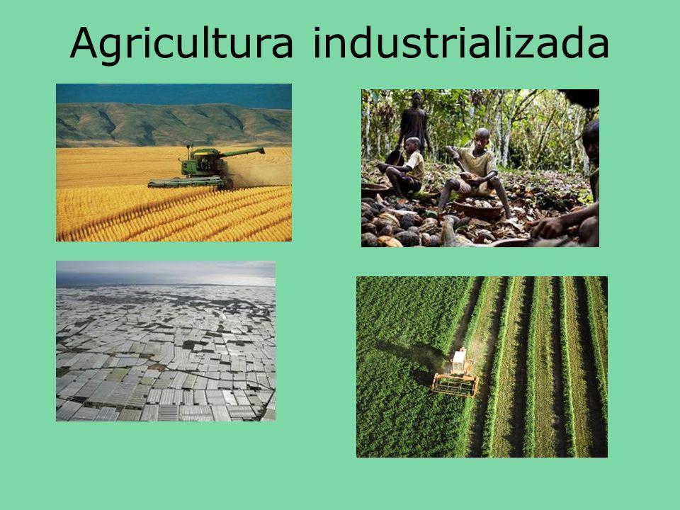 RECURSOS ENERGÉTICOS El bioetanol se obtiene de la fermentación y posterior destilación de cereales, remolacha y caña de azúcar.