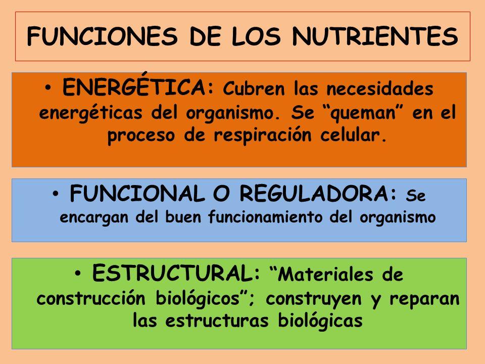 FUNCIONES DE LOS NUTRIENTES ENERGÉTICA: Cubren las necesidades energéticas del organismo. Se queman en el proceso de respiración celular. ESTRUCTURAL: