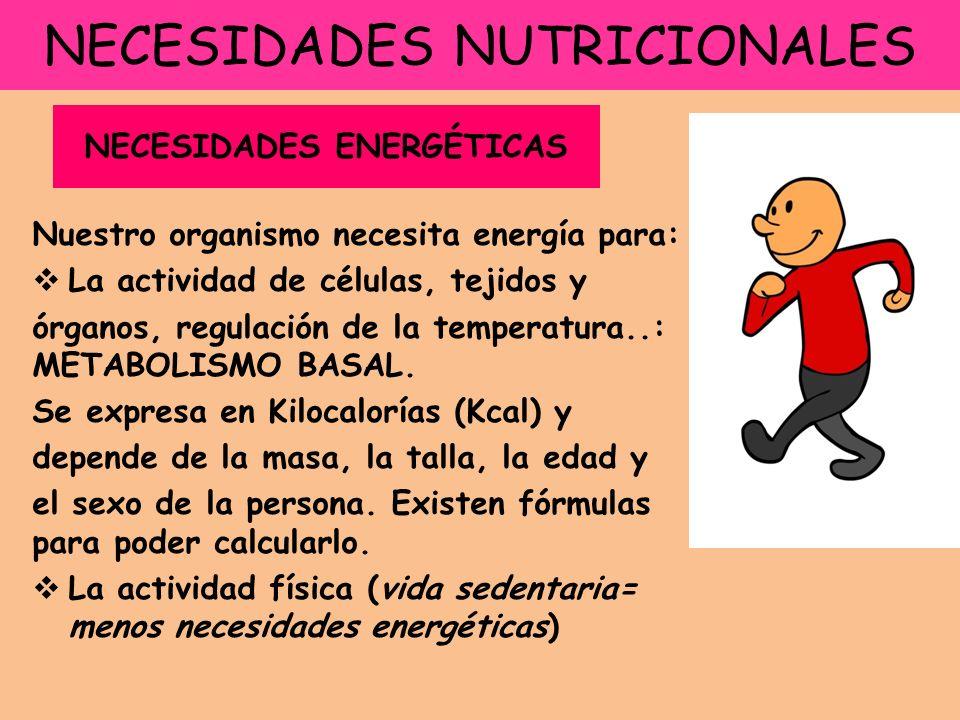 NECESIDADES NUTRICIONALES Nuestro organismo necesita energía para: La actividad de células, tejidos y órganos, regulación de la temperatura..: METABOL