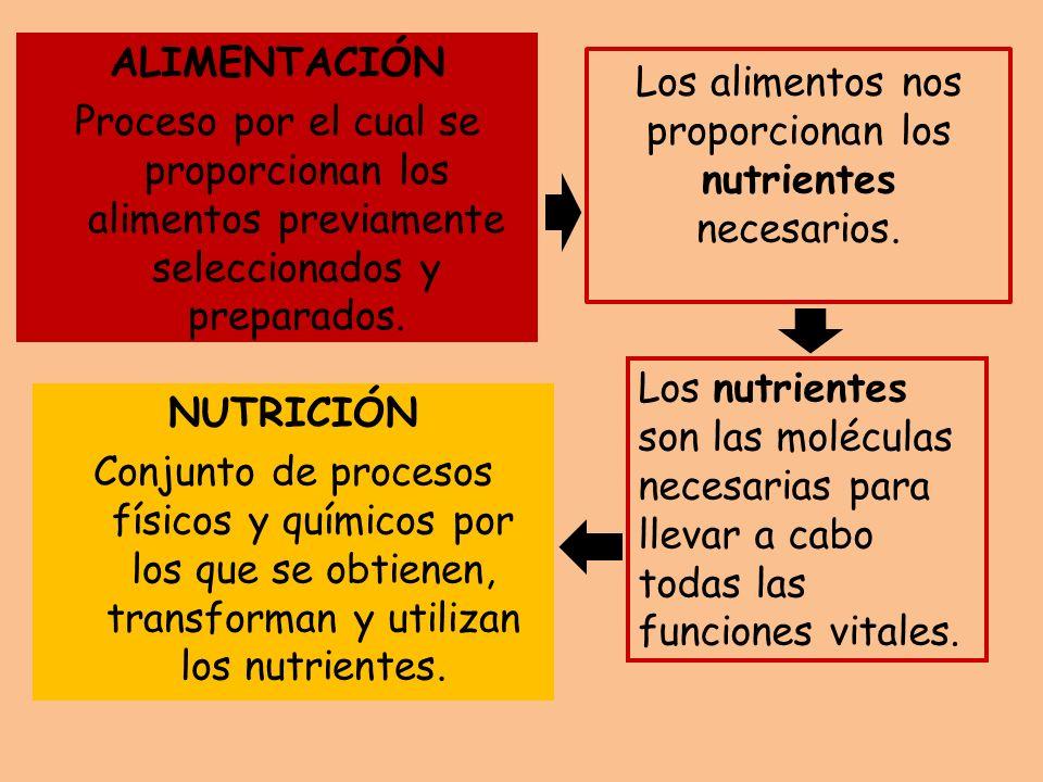 Los alimentos nos proporcionan los nutrientes necesarios. ALIMENTACIÓN Proceso por el cual se proporcionan los alimentos previamente seleccionados y p