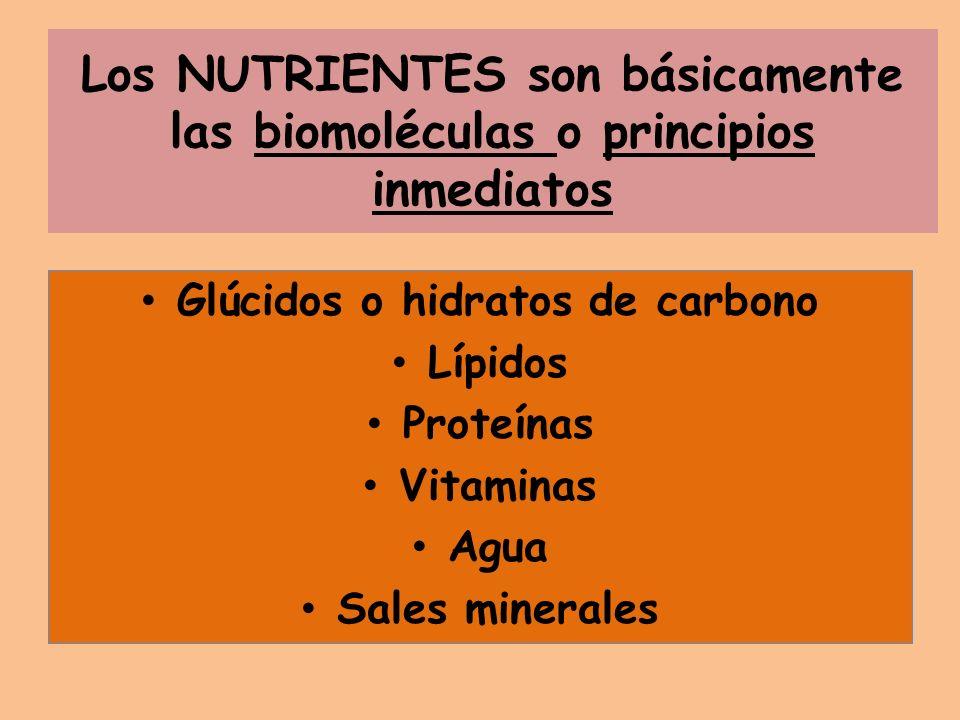 Los NUTRIENTES son básicamente las biomoléculas o principios inmediatos Glúcidos o hidratos de carbono Lípidos Proteínas Vitaminas Agua Sales minerale