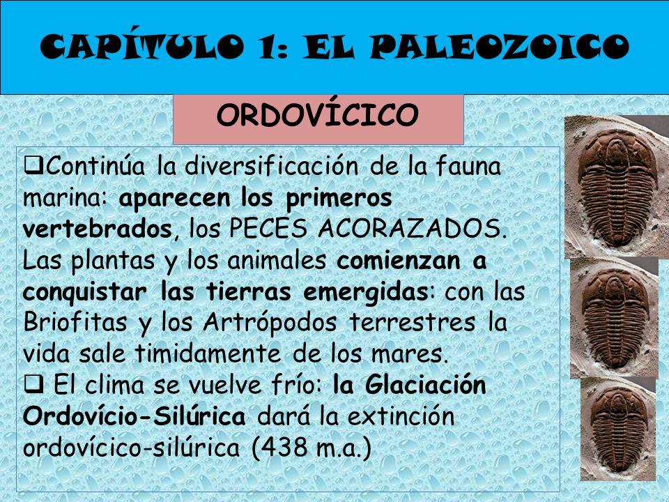 CAPÍTULO 1: EL PALEOZOICO ORDOVÍCICO Continúa la diversificación de la fauna marina: aparecen los primeros vertebrados, los PECES ACORAZADOS. Las plan