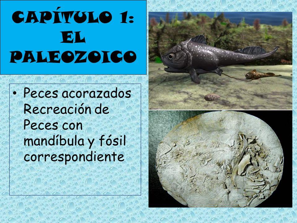 CAPÍTULO 1: EL PALEOZOICO Peces acorazados Recreación de Peces con mandíbula y fósil correspondiente
