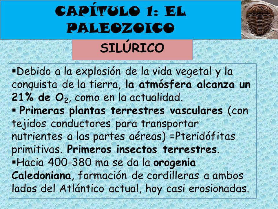 CAPÍTULO 1: EL PALEOZOICO SILÚRICO Debido a la explosión de la vida vegetal y la conquista de la tierra, la atmósfera alcanza un 21% de O 2, como en l