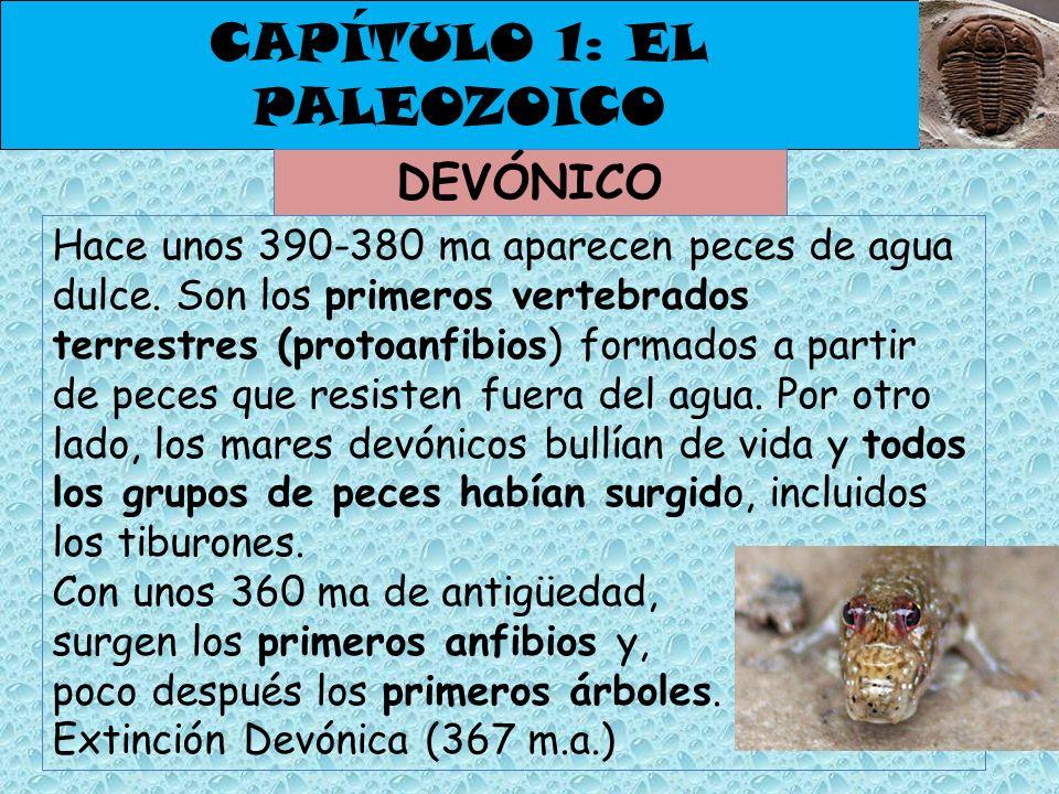 CAPÍTULO 1: EL PALEOZOICO DEVÓNICO Hace unos 390-380 ma aparecen peces de agua dulce. Son los primeros vertebrados terrestres (protoanfibios) formados