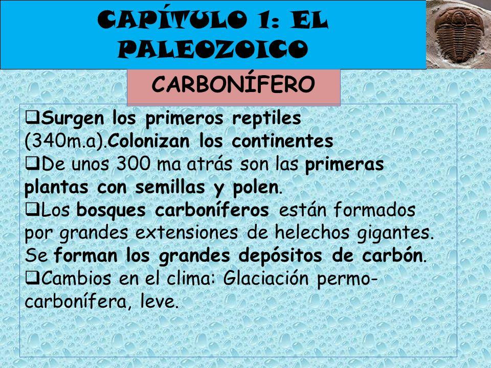 CAPÍTULO 1: EL PALEOZOICO CARBONÍFERO Surgen los primeros reptiles (340m.a).Colonizan los continentes De unos 300 ma atrás son las primeras plantas co