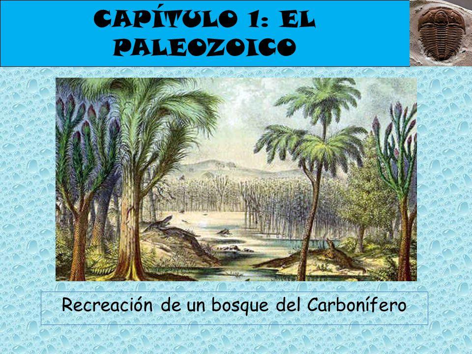 CAPÍTULO 1: EL PALEOZOICO Recreación de un bosque del Carbonífero
