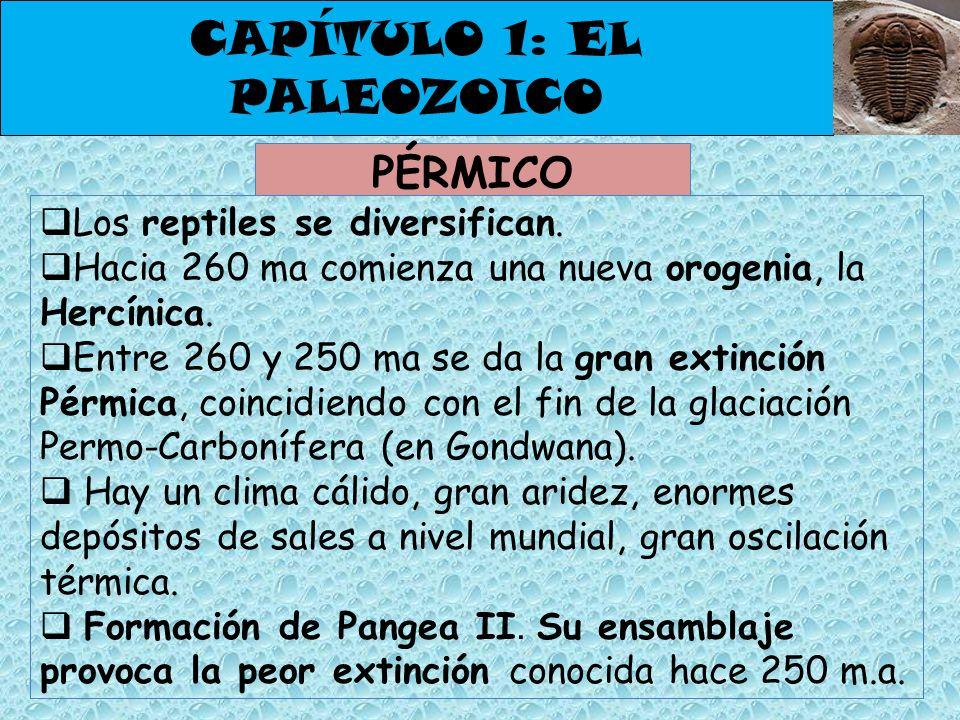 CAPÍTULO 1: EL PALEOZOICO PÉRMICO Los reptiles se diversifican. Hacia 260 ma comienza una nueva orogenia, la Hercínica. Entre 260 y 250 ma se da la gr