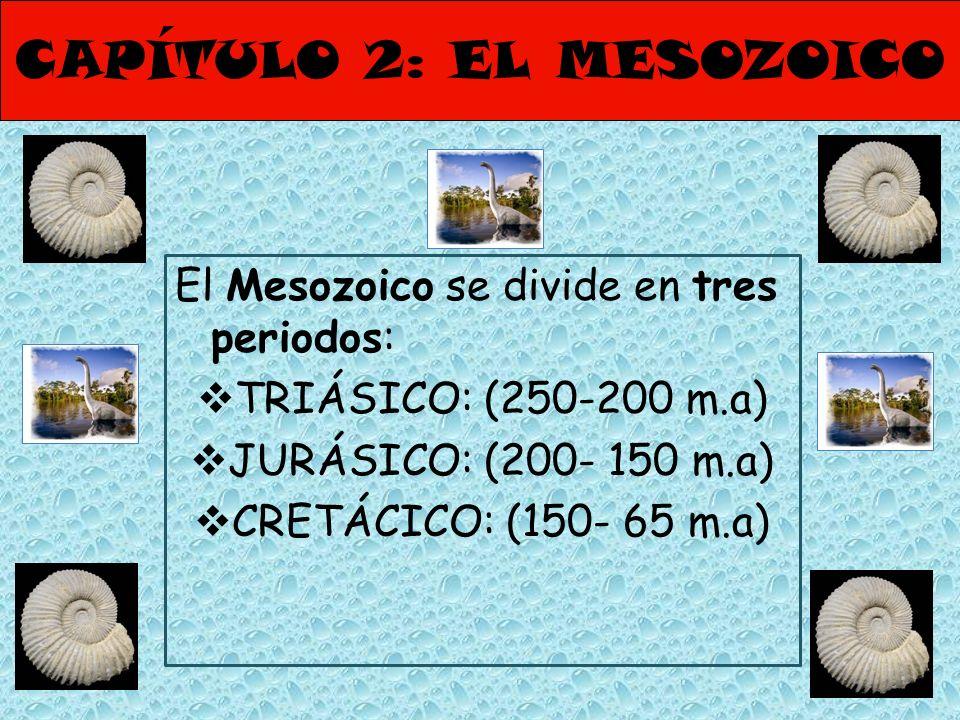 CAPÍTULO 2: EL MESOZOICO El Mesozoico se divide en tres periodos: TRIÁSICO: (250-200 m.a) JURÁSICO: (200- 150 m.a) CRETÁCICO: (150- 65 m.a)