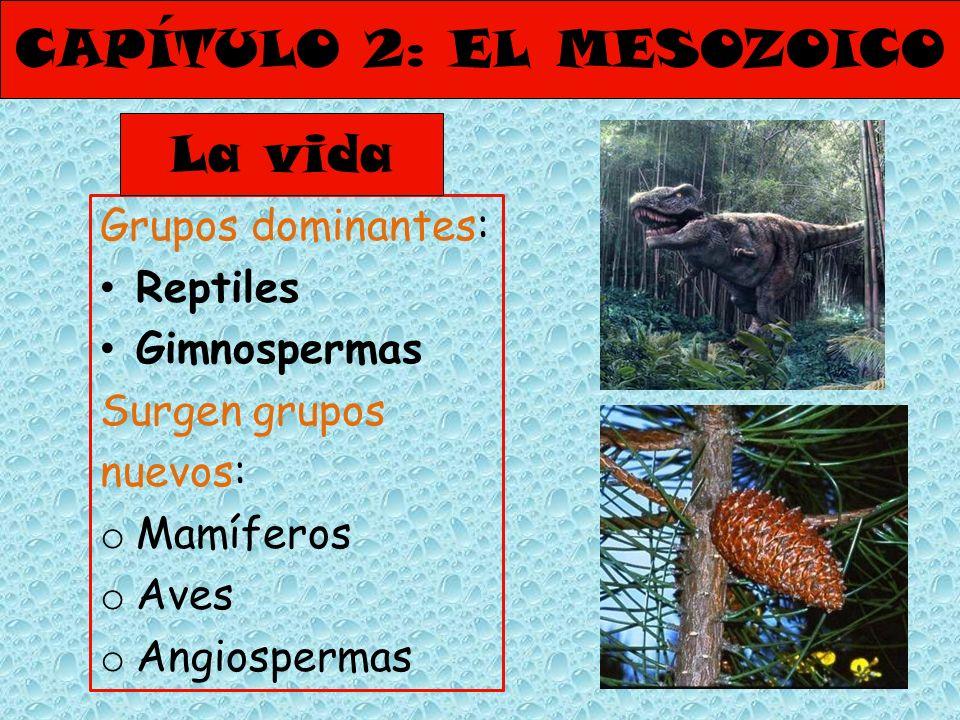 CAPÍTULO 2: EL MESOZOICO Grupos dominantes: Reptiles Gimnospermas Surgen grupos nuevos: o Mamíferos o Aves o Angiospermas La vida
