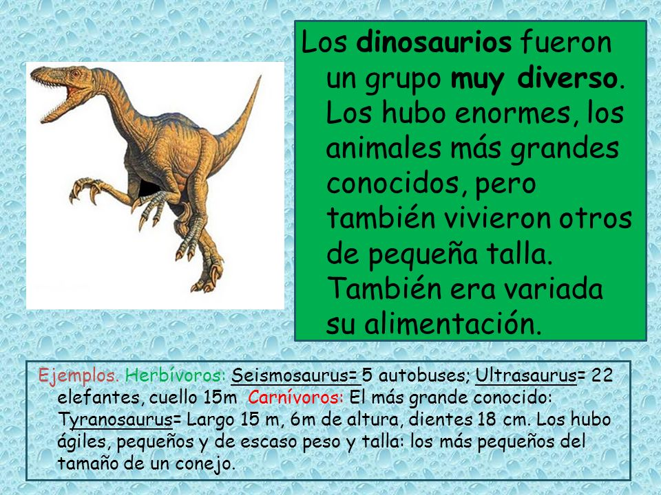 Los dinosaurios fueron un grupo muy diverso. Los hubo enormes, los animales más grandes conocidos, pero también vivieron otros de pequeña talla. Tambi