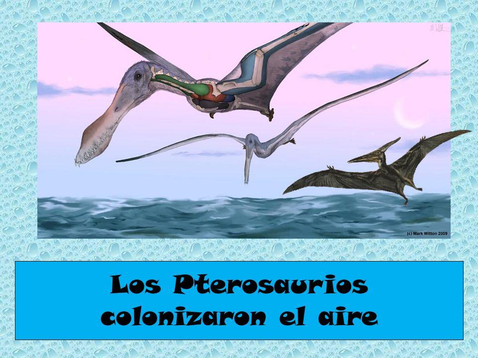 Los Pterosaurios colonizaron el aire