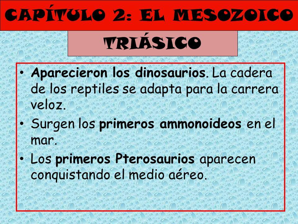 CAPÍTULO 2: EL MESOZOICO Aparecieron los dinosaurios. La cadera de los reptiles se adapta para la carrera veloz. Surgen los primeros ammonoideos en el