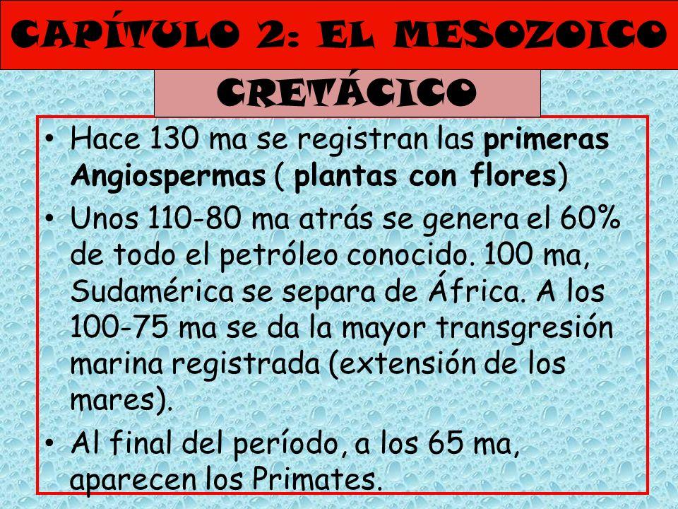 CAPÍTULO 2: EL MESOZOICO Hace 130 ma se registran las primeras Angiospermas ( plantas con flores) Unos 110-80 ma atrás se genera el 60% de todo el pet