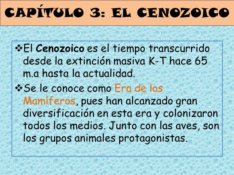 El Cenozoico es el tiempo transcurrido desde la extinción masiva K-T hace 65 m.a hasta la actualidad. Se le conoce como Era de los Mamíferos, pues han