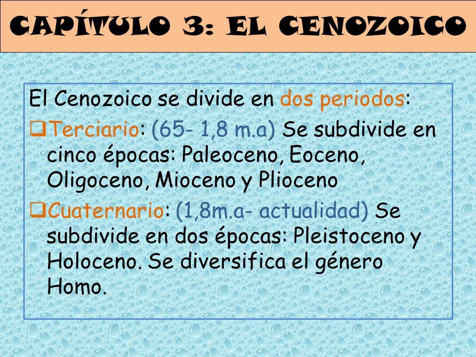 CAPÍTULO 3: EL CENOZOICO El Cenozoico se divide en dos periodos: Terciario: (65- 1,8 m.a) Se subdivide en cinco épocas: Paleoceno, Eoceno, Oligoceno,