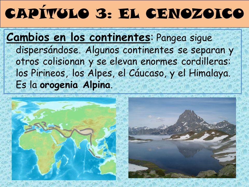 CAPÍTULO 3: EL CENOZOICO Cambios en los continentes: Pangea sigue dispersándose. Algunos continentes se separan y otros colisionan y se elevan enormes