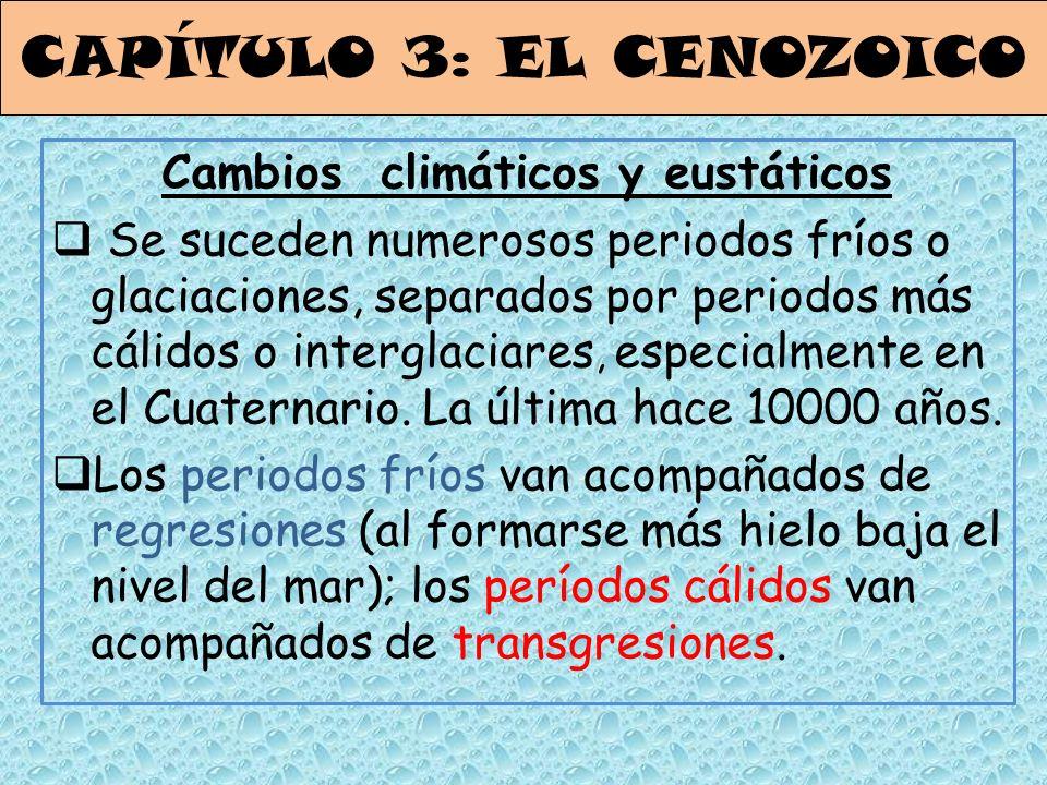 CAPÍTULO 3: EL CENOZOICO Cambios climáticos y eustáticos Se suceden numerosos periodos fríos o glaciaciones, separados por periodos más cálidos o inte