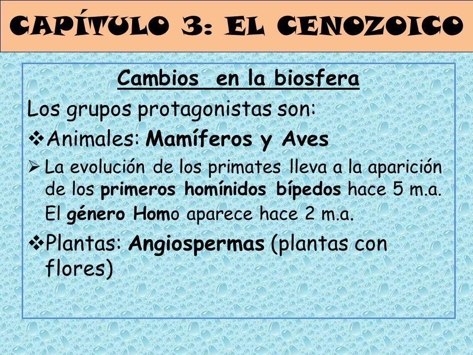 CAPÍTULO 3: EL CENOZOICO Cambios en la biosfera Los grupos protagonistas son: Animales: Mamíferos y Aves La evolución de los primates lleva a la apari