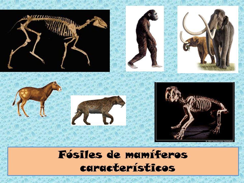 Fósiles de mamíferos característicos