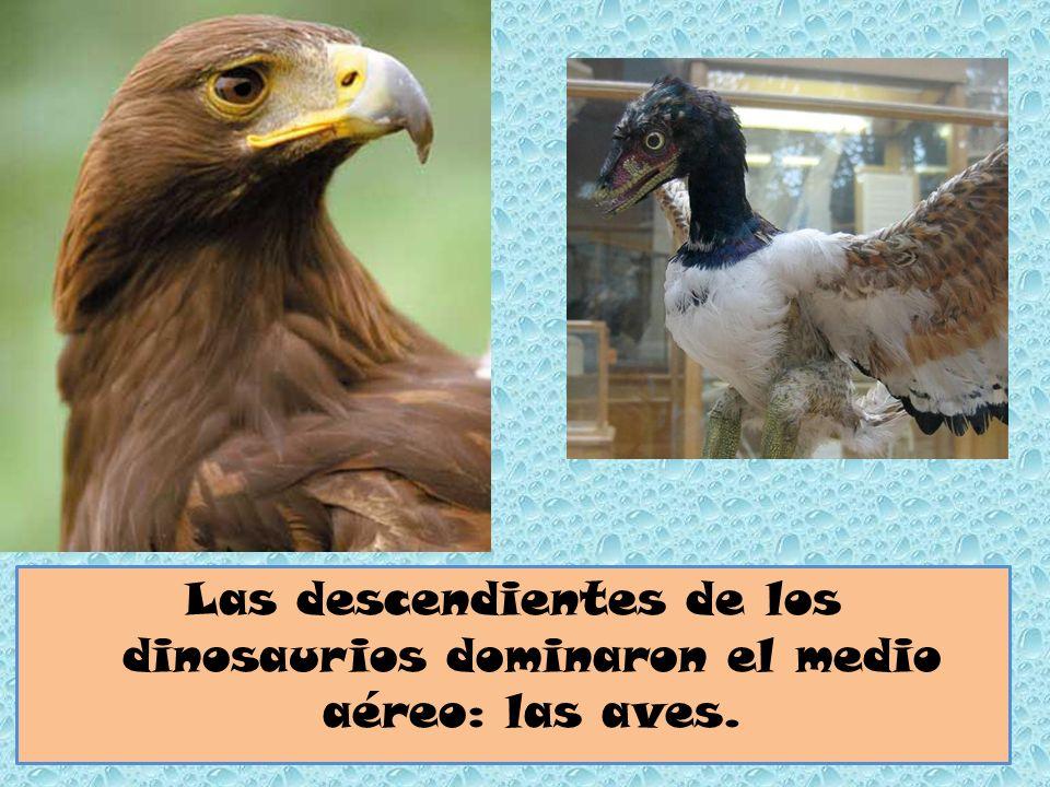 Las descendientes de los dinosaurios dominaron el medio aéreo: las aves.