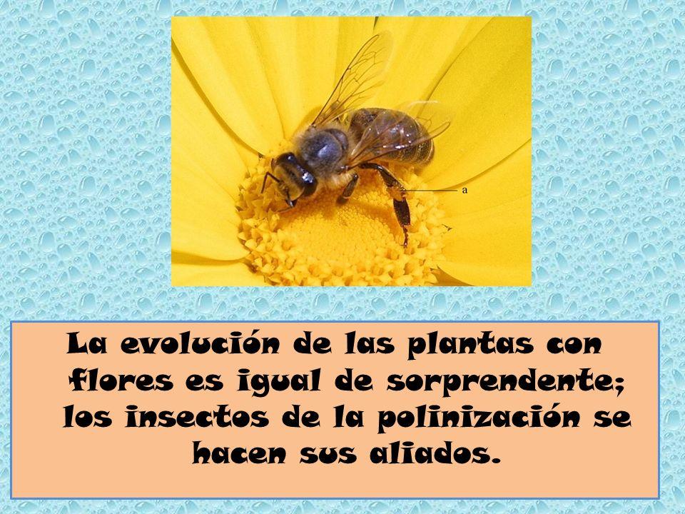 La evolución de las plantas con flores es igual de sorprendente; los insectos de la polinización se hacen sus aliados.