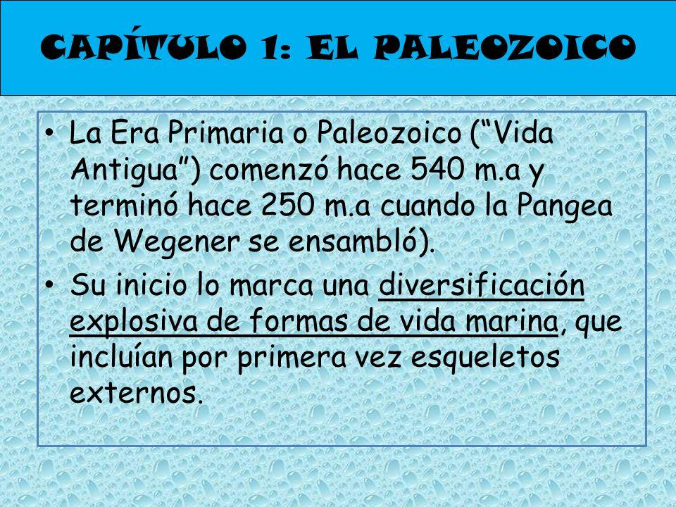 La Era Primaria o Paleozoico (Vida Antigua) comenzó hace 540 m.a y terminó hace 250 m.a cuando la Pangea de Wegener se ensambló). Su inicio lo marca u