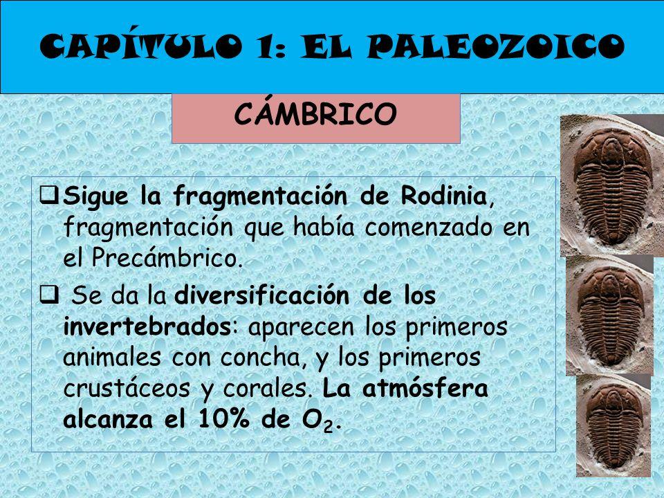 CAPÍTULO 1: EL PALEOZOICO CÁMBRICO Sigue la fragmentación de Rodinia, fragmentación que había comenzado en el Precámbrico. Se da la diversificación de