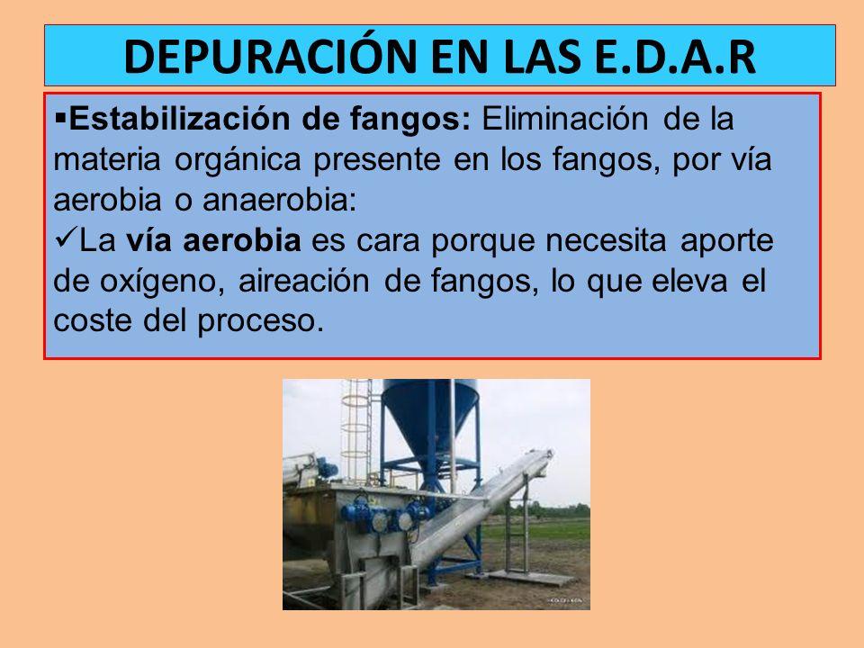 Estabilización de fangos: Eliminación de la materia orgánica presente en los fangos, por vía aerobia o anaerobia: La vía aerobia es cara porque necesi