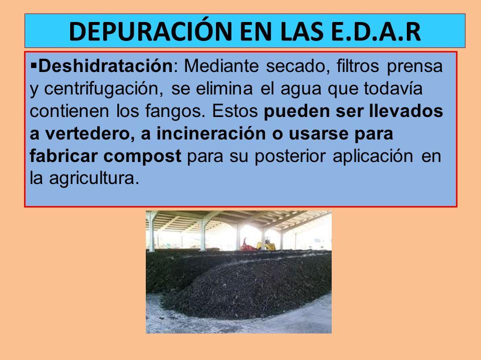Deshidratación: Mediante secado, filtros prensa y centrifugación, se elimina el agua que todavía contienen los fangos. Estos pueden ser llevados a ver