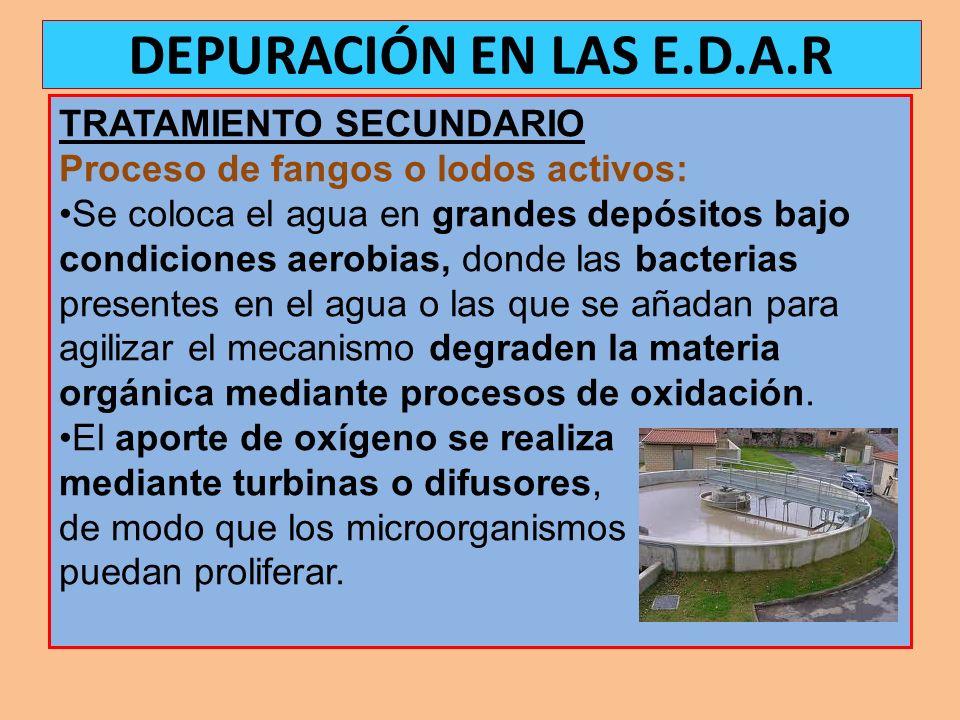 TRATAMIENTO SECUNDARIO Proceso de fangos o lodos activos: Se coloca el agua en grandes depósitos bajo condiciones aerobias, donde las bacterias presen