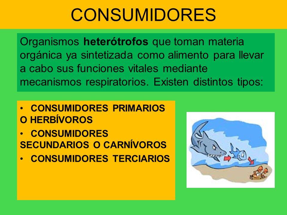 CONSUMIDORES Organismos heterótrofos que toman materia orgánica ya sintetizada como alimento para llevar a cabo sus funciones vitales mediante mecanis