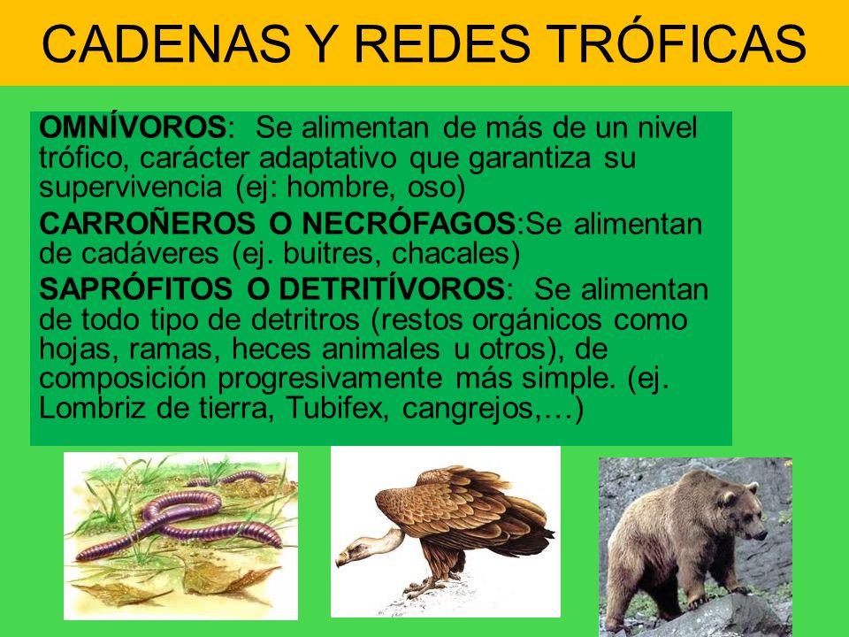CADENAS Y REDES TRÓFICAS OMNÍVOROS: Se alimentan de más de un nivel trófico, carácter adaptativo que garantiza su supervivencia (ej: hombre, oso) CARR