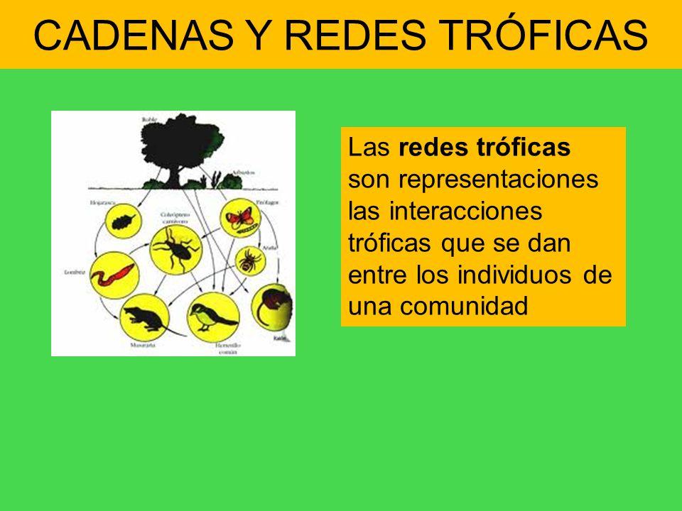 CADENAS Y REDES TRÓFICAS Las redes tróficas son representaciones las interacciones tróficas que se dan entre los individuos de una comunidad