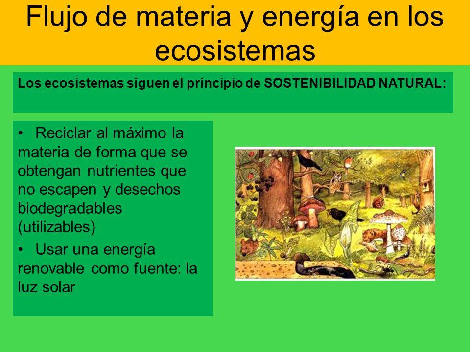 Flujo de materia y energía en los ecosistemas Los ecosistemas siguen el principio de SOSTENIBILIDAD NATURAL: Reciclar al máximo la materia de forma qu