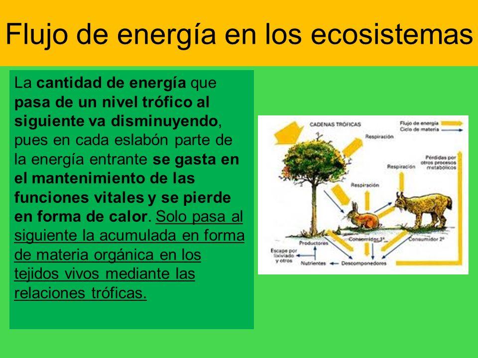 La cantidad de energía que pasa de un nivel trófico al siguiente va disminuyendo, pues en cada eslabón parte de la energía entrante se gasta en el man