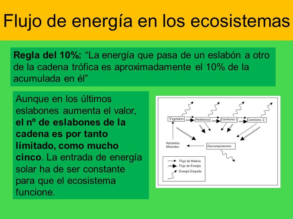 Flujo de energía en los ecosistemas Regla del 10%: La energía que pasa de un eslabón a otro de la cadena trófica es aproximadamente el 10% de la acumu